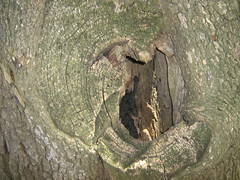 2 - two gypsies laughed for they see me  photographing a tree hole - by MagdaMontemor