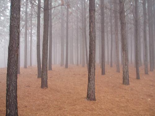Sappi_plantations