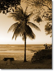 Final de tarde - Av Beira Mar - Fortaleza/Ce (Tereza Duarte) Tags: brazil beach fortaleza ceará sépia nordestedobrasil mywinners praiasdonordeste mapeamentofotográficodefortaleza terezaduarte terezamaria avenidabeiramarfortaleza