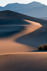 Dune Shadow (sandy.redding) Tags: california landscape nationalpark sand nikon desert dunes dune deathvalley def d300 stovepipewells deathvalleynationalpark arrakis honorablemention desertplanet dvnp explored mesquitedunes nikond300 shotwithstevemendenhall nikkor80200mmf28ded portraitorientedlandscape desertempirefair2010