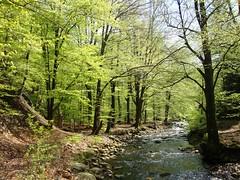 River Hill (RoMaj) Tags: forest woods belgium belgique walk belgi naturereserve veen bos fen venn intothewoods bois wandeling belgien naturpark hogevenen hohesvenn hautesfagnes woud lttich natuurgebied fagne ternell parcnaturel provincieluik provincedelige highfens