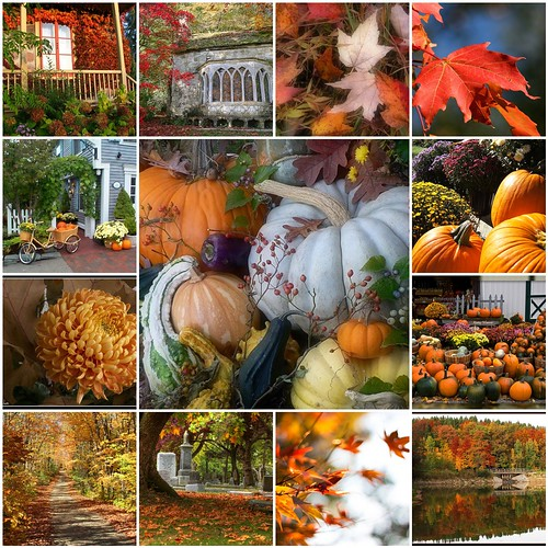 Amazing Autumn!