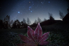 Frosted Leaf  Galaxy (masahiro miyasaka) Tags: christmas travel blue autumn winter red sky white snow tree ice nature beautiful japan night canon wonderful stars wonder outdoors star frozen maple fringe frosty nasa fisheye explore galaxy astrophotography  wallpapers frontpage apod milkyway  startrail   earthandsky  frostedleaf rimeice sigma15mmf28exdgfisheye  iso4000  eos5dmark frostedleave
