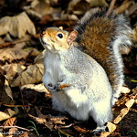 can I have some more nuts sir [[squirel]]