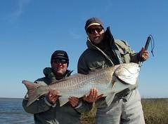 MT_BC_Bullred (wayupstream) Tags: sidebar redfish sst