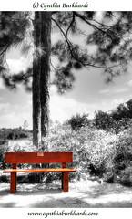 Morikami Japanese Garden 08 (CynDB) Tags: park red blackandwhite bw white black art nature garden bench landscape ir photography contemporary fineart creative jardin jardim buy prints imaging morikami tuin handcolored garten purchase tinted giardino japonais giapponese handtinted jardn japons japans japons digitalir printsavailable japanisch printsforsale buyprints cynthiaburkhardt cynthiaburkhardtcom creativefineartphotographyimaging wwwcynthiaburkhardtcom wwwburkhardtphotographycom cynthiaburkhardtphotography lightcommunication burkhardtphotographycom morikamimuseumandjapanesegarden