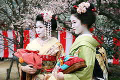 S I S T E R S: Kamishichiken (mboogiedown) Tags: travel cute girl beauty japan asian japanese kyoto asia traditional culture plum maiko geiko geisha kimono tradition ume kansai hanami baikasai hanamachi kamishichiken ilovekyoto hanakanzashi discoverkyoto ichimame ichifumi