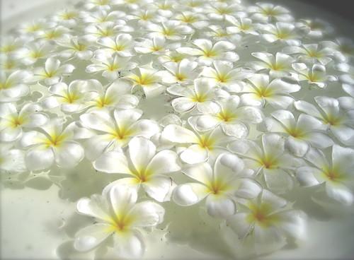 summer flower white flowers, Beautiful flower