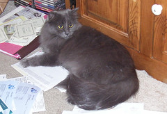 Wanda helping organize papers