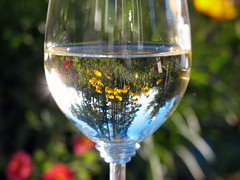 My garden looks better with wine.... (1bluecanoe) Tags: wine explore mygarden soe vino supershot columbiavalley explored abigfave 1bluecanoe 1on1reflections diamondclassphotographer citrit theunforgettablepictures wineart snoqualmie2005sauvignonblanc cted08lic visionqualitygroup