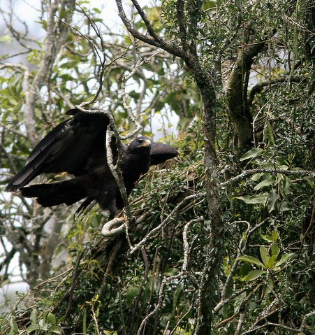 black eagle nandi hills 300907