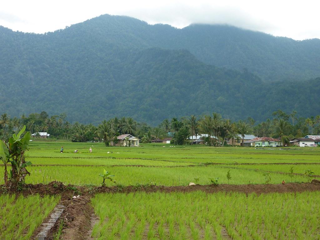 Sumatra-Lac Maninjau (103)