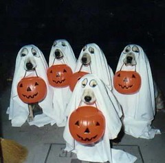 dog_halloween