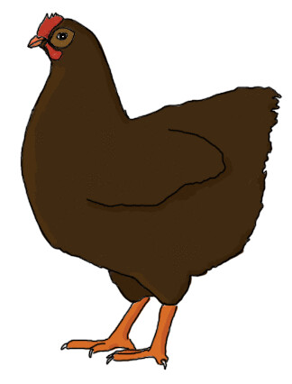 Brown Chicken