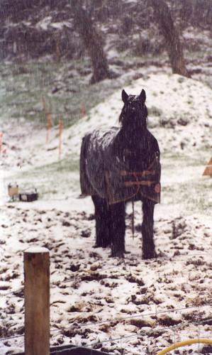 Horses008