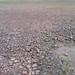 Leito seco do Rio Negro