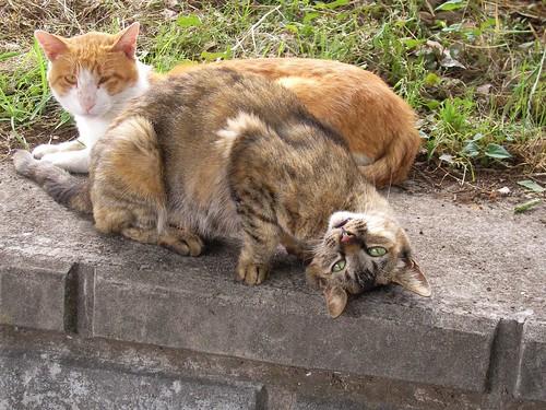 ネコは子どもを育てるけど、人間は捨てる。ネコの飼い主を「里親」というのはネコに失礼だわ。