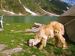 On Saif-ul-Malook (Kaafoor) Tags: trip travel blue pakistan summer vacation lake green love nature beautiful beauty north lakes prince visit best valley pakistani kaghan nwfp ul saif kagan adeel naran iloveit saifulmaluk lalazar naraan northernarea jheel saifulmalook saiful malook theworldsbest greaan lakesaifulmalook lakesinpakistan naaran ilovetraveling jhil ihavebeentothisplace lalazaar shehzadi pakistanilake pakistanijheel kaaghan kagaan saifalmalook badeeujjamal lovestry