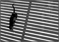 1 (yantiparrazi) Tags: blackandwhite bw cats abstract lines cat