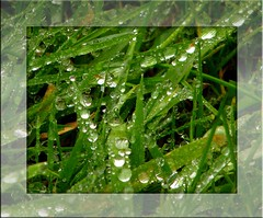 Somebody - - - (egefan - Suzan Almond) Tags: green rain diamonds drops lawn frass diamondclassphotographer flickrdiamond