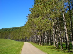 Trees along pathway (NJEphotography) Tags: blue trees ohio sky tree green forest photography evans woods skies treeline pathway pathways nje awesometrees evansphotography northeastphotography njephotography