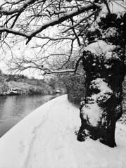 Grand Union Canal (Sparrowfall) Tags: trees winter snow cold 120 monochrome mediumformat canal 645 mamiya645 ilfordfp4plus 80mmf19