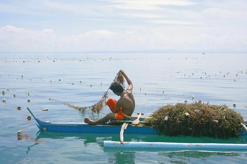 farming seaweed at Mambacayao