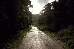 (Techuser) Tags: road rain rainforest offroad trail pathway intervales