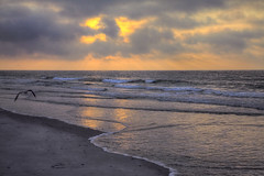 Surfside Beach Sunrise (G-daddyArt) Tags: ocean morning sun bird beach water clouds sunrise landscape myrtlebeach sand waves seagull hdr seacape surfsidebeach