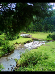 .... (RC Sreejith | ) Tags: green nature stream kerala munnar riverstream sreejithrc rcsreejith munnarstream