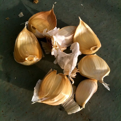 Vallelado garlic cloves for planting