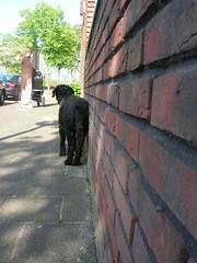 DSCN2264 (Amigrante Nnimo) Tags: dog chien cane fur hond tommy perro hund pelo badbreath peludo elmejoramigodelhombre malaliento muchopelo elmejoramigodestehombre