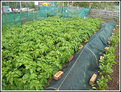 allotment 3 copy