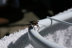 IMG_1534.JPG (Ove Eeg) Tags: animal bug tege