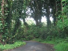Day9 - Maui - Road to Hana - Nihue (Amudha Irudayam) Tags: beach hawaii maui hana amu amudha nihue