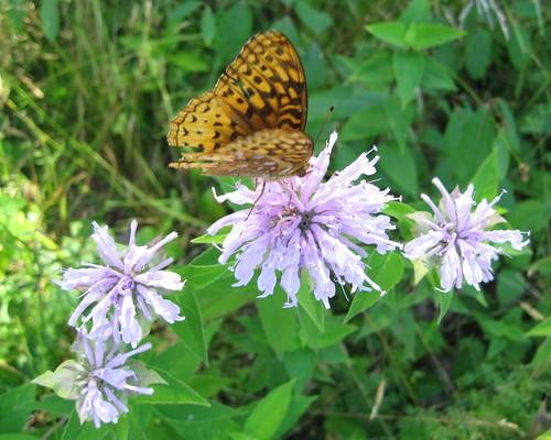Flickriver Photoset Garden Places By Pandorea
