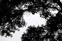 Patterns (Jamie Milton- Photography) Tags: camera trees bw rain blackwhite pretty background isleofwight template faulty totlandbay