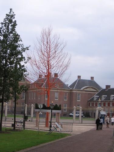 Orange tree (2)