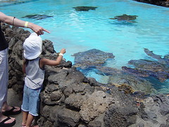 DSC07975 (BossaNova2001) Tags: birthday hawaii waikiki 2007 4yrs mitsuki 2007sep