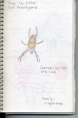 nature journal spider