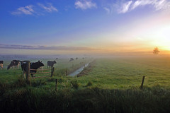 Dreamscape (buteijn) Tags: sun mist holland fog sunrise haze nevel bravo utrecht cows foggy nederland weiland dreamscape koeien zonsopgang driebergen langbroek ochtendmist