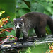 Mammals of Costa Rica - David Dodge