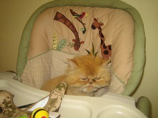 puttyinahighchair