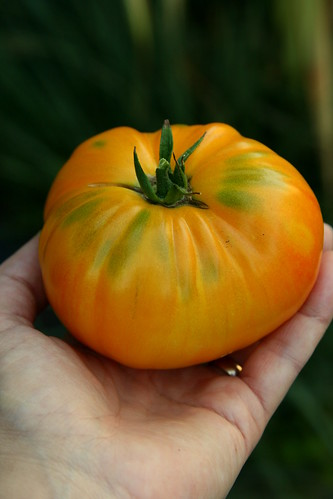 BWPS tomato