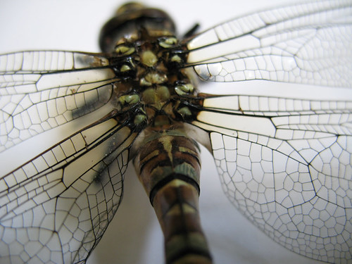 Migrant Hawker (deceased)