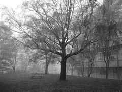 Casino Vetera (Don Vacomano) Tags: autumn mist fog niebla valdivia uach