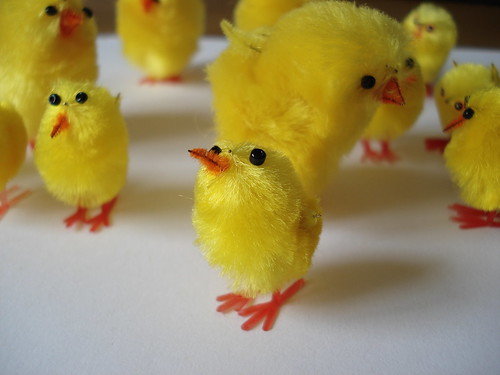 chicks close