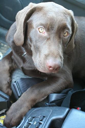 Cooper rides shotgun