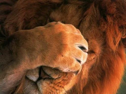 Leão, a mordida é grande...
