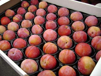 nectarines at the Public Market
